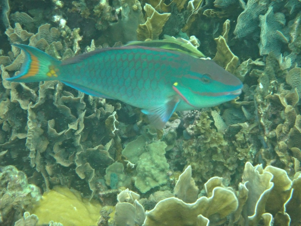 marine ecology mentor