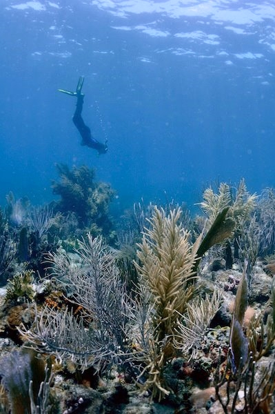 coral reef conservation - mentor