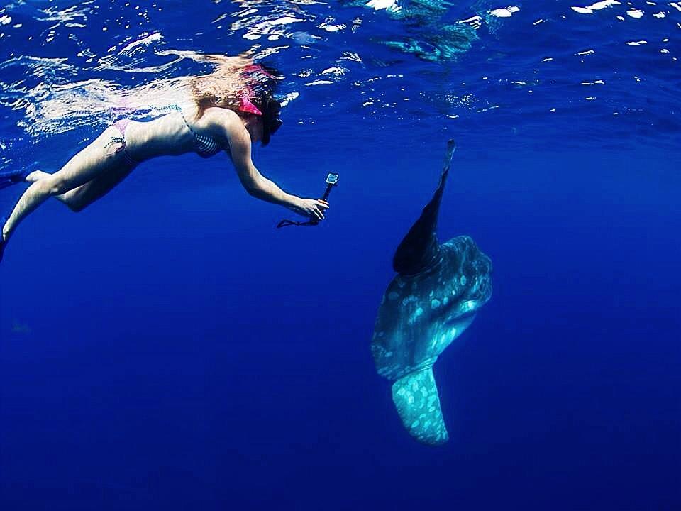 coral reef ocean science mentor
