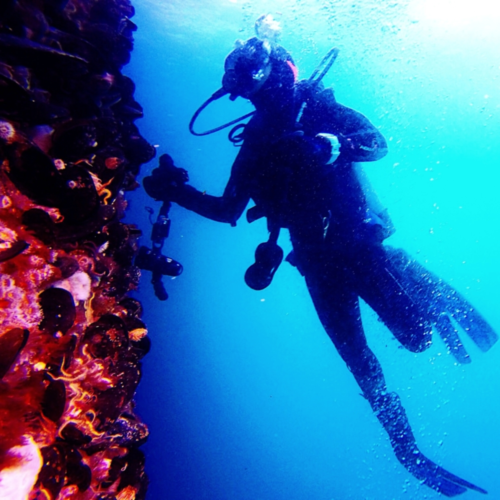 coral reef exploration