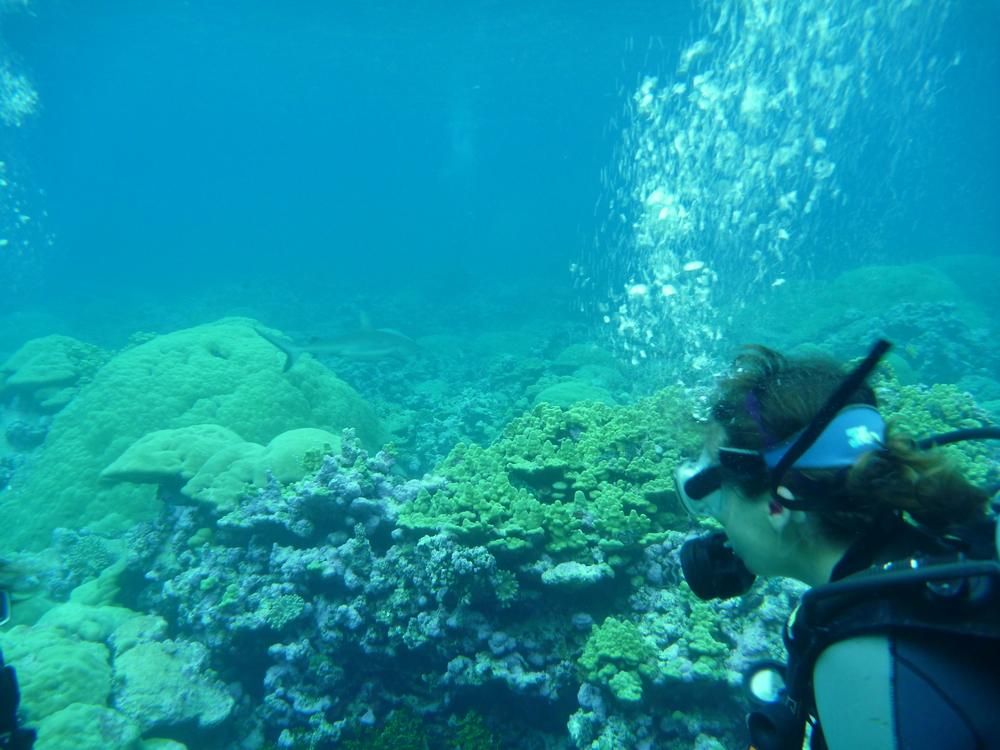 oceanography - ocean gems mentor- Carilli