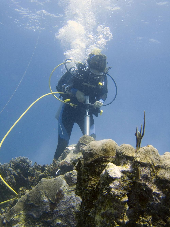 oceanography mentor
