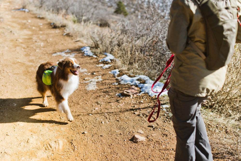 off-leash-hiking-with-dogs-fort-collins-training