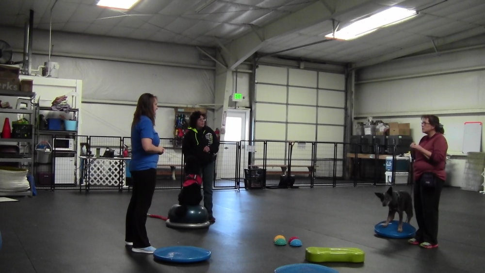 Echo & Ryder balance like pros - working on those core muscles that will help them avoid injury in agility!
