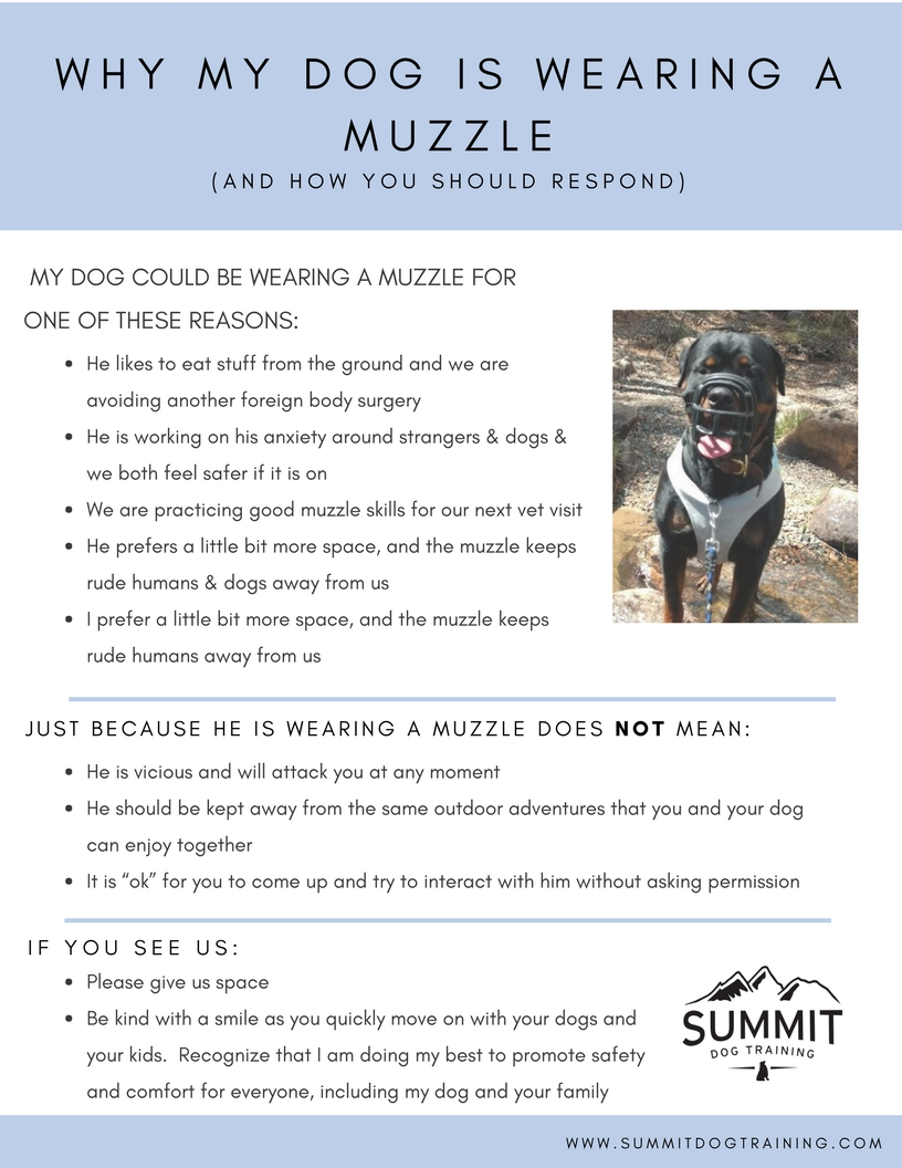 muzzle-wearing-dog-training-fort-collins-colorado