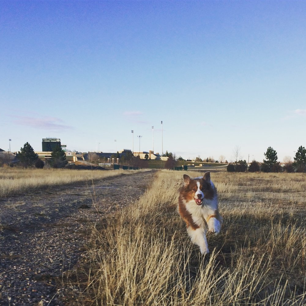 dog-training-fort-collins-colorado