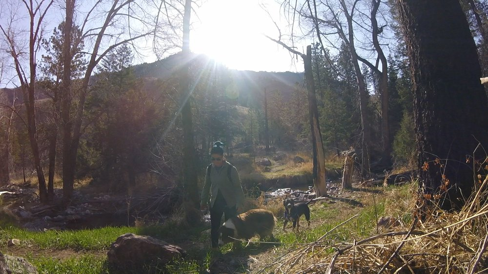 dog-hiking-structure-positive-dog-training-colorado