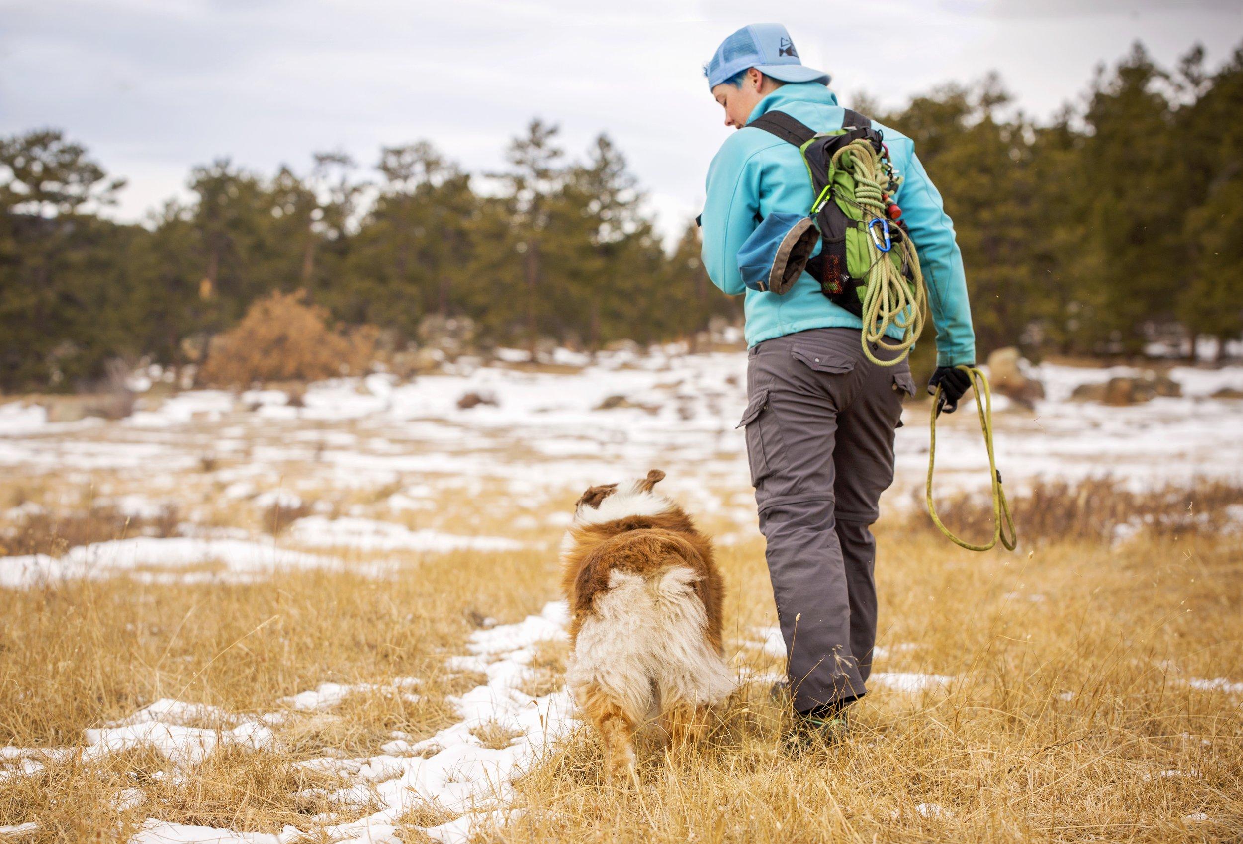 BLOG — Summit Dog Training