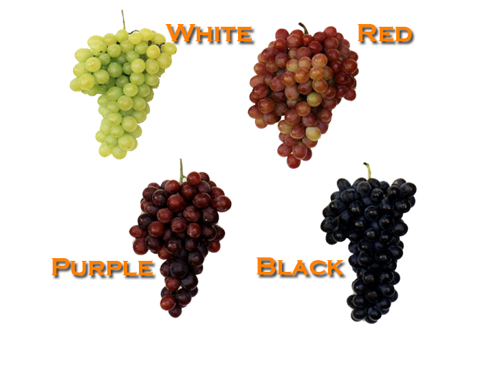 <strong>GRAPE</strong>