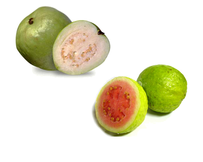 <strong>GUAVA</strong>