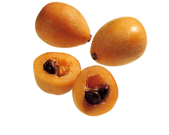 <strong>LOQUAT</strong>