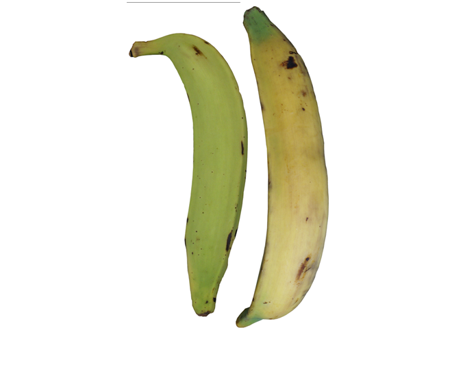 <strong>PLANTAIN</strong>