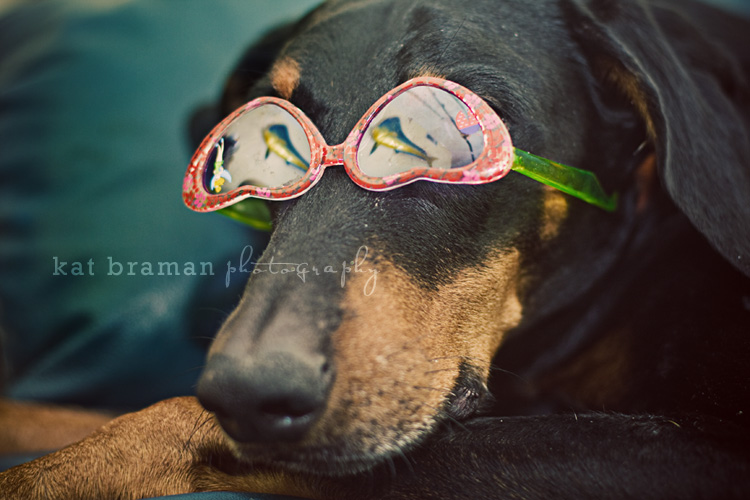A Doberman Plays Dress Up