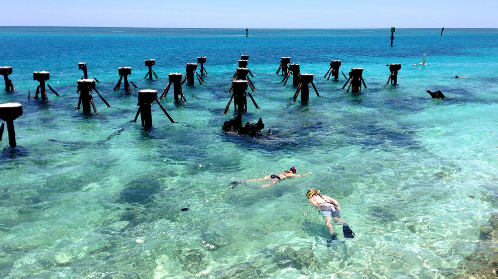 Snorkelers check out the underwater ecosystem at Dry Tortugas National Park. (Image:  Flickr )