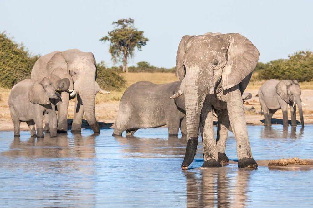 Botswana's Chobe National Park boasts the largest continuous elephant population in Africa (Image:  Pixabay )