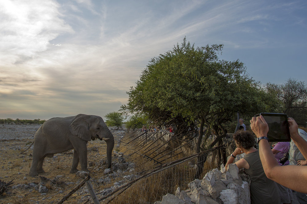 Visitors get up close and personal with an elephant at the Okaukuejo waterhole in Etosha National Park (Image:  Wikimedia Commons )