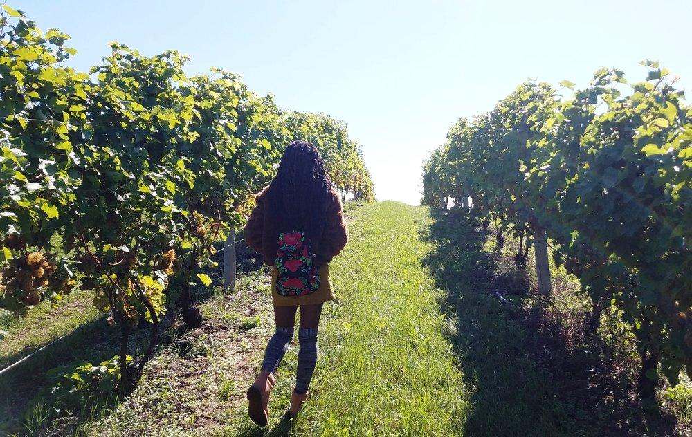 Wandering among the vines at Chateau Chantal