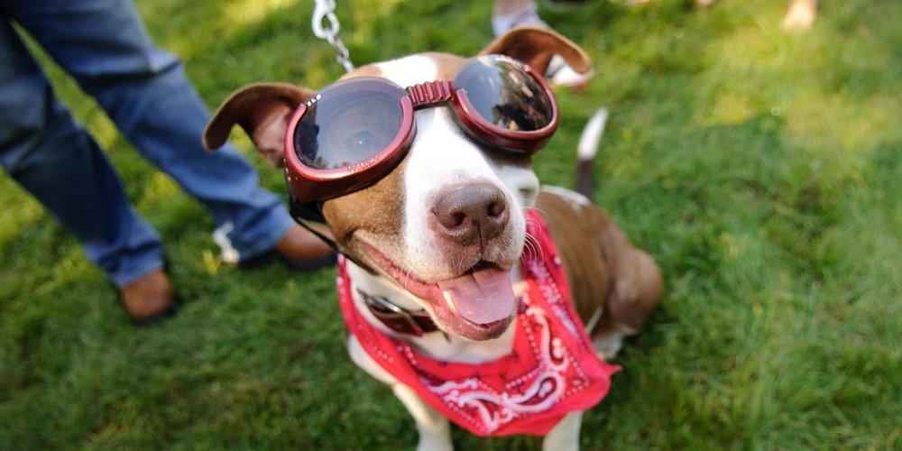 Pups Pilsners.jpg