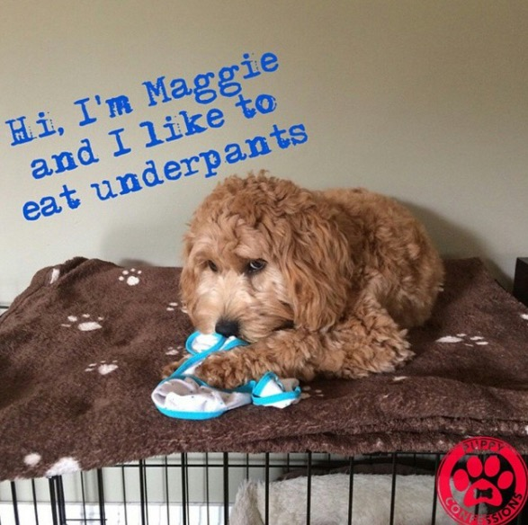 Puppy Confessions