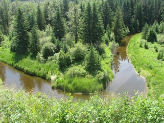 Pipestone Creek              Forests, slopes and breathtaking views of Pipestone Creek. EXPLORE THIS LAND