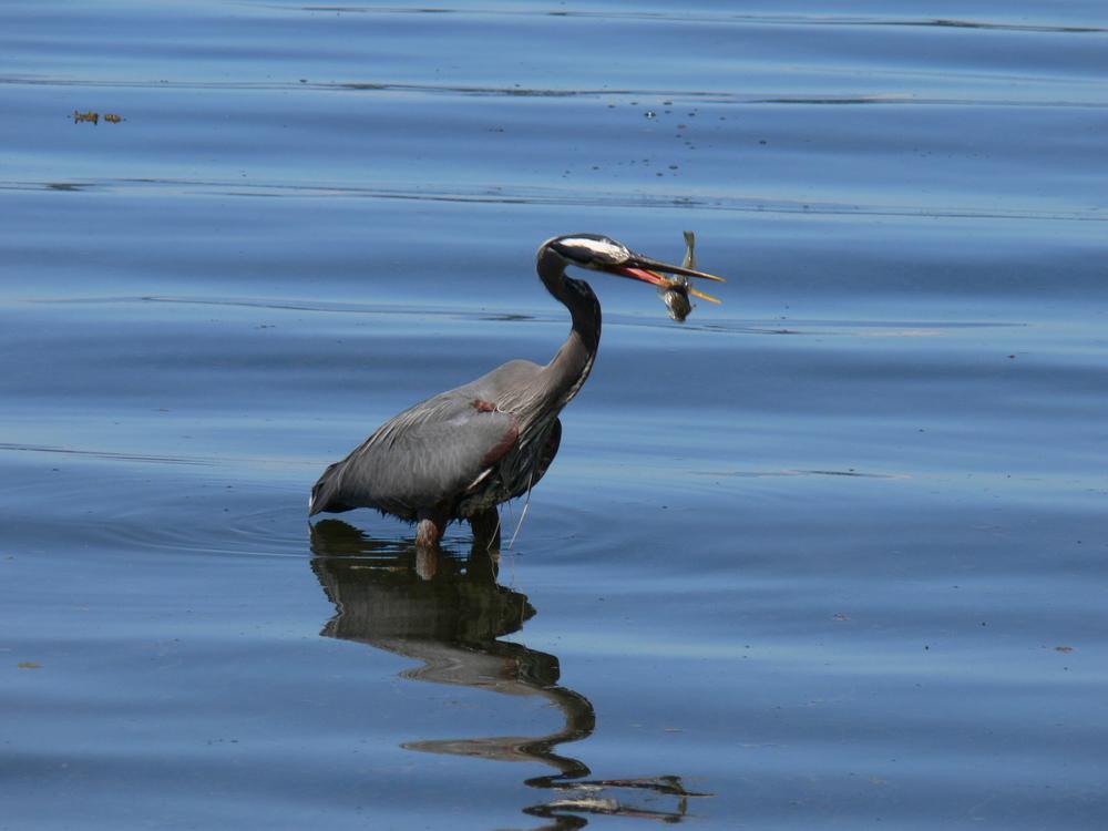 Fishing by Doris May