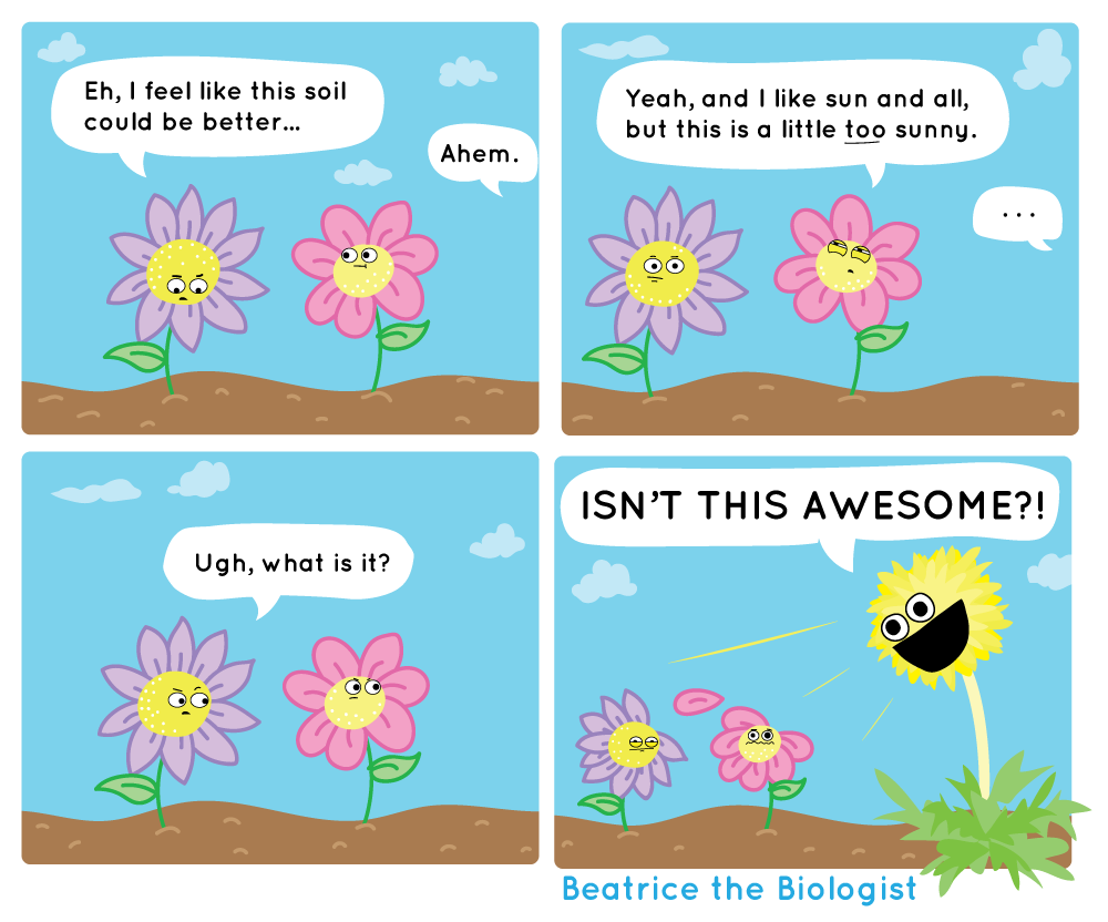 dandelion - beatrice biologist.png