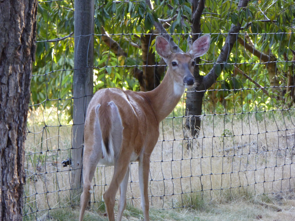 Deer photo by Tim Paetkau
