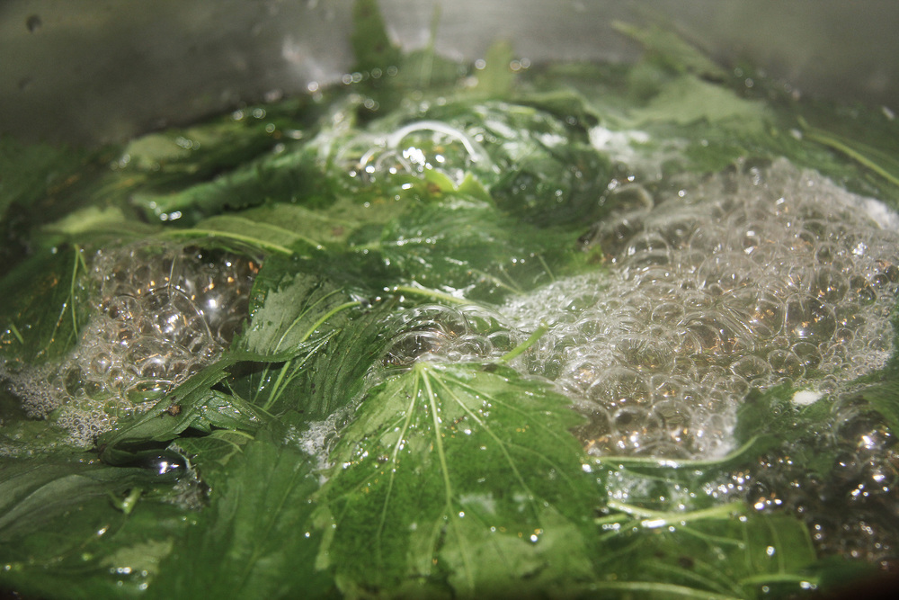 Blanching the nettle in boiling water works to take away the stinging properties
