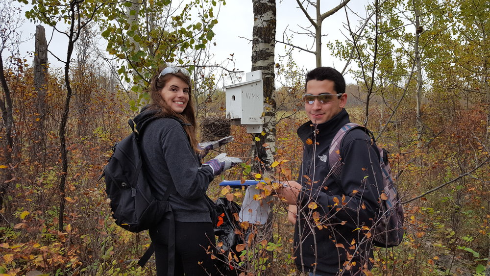 University of Alberta students cleaning a nest box at Pipestone Creek