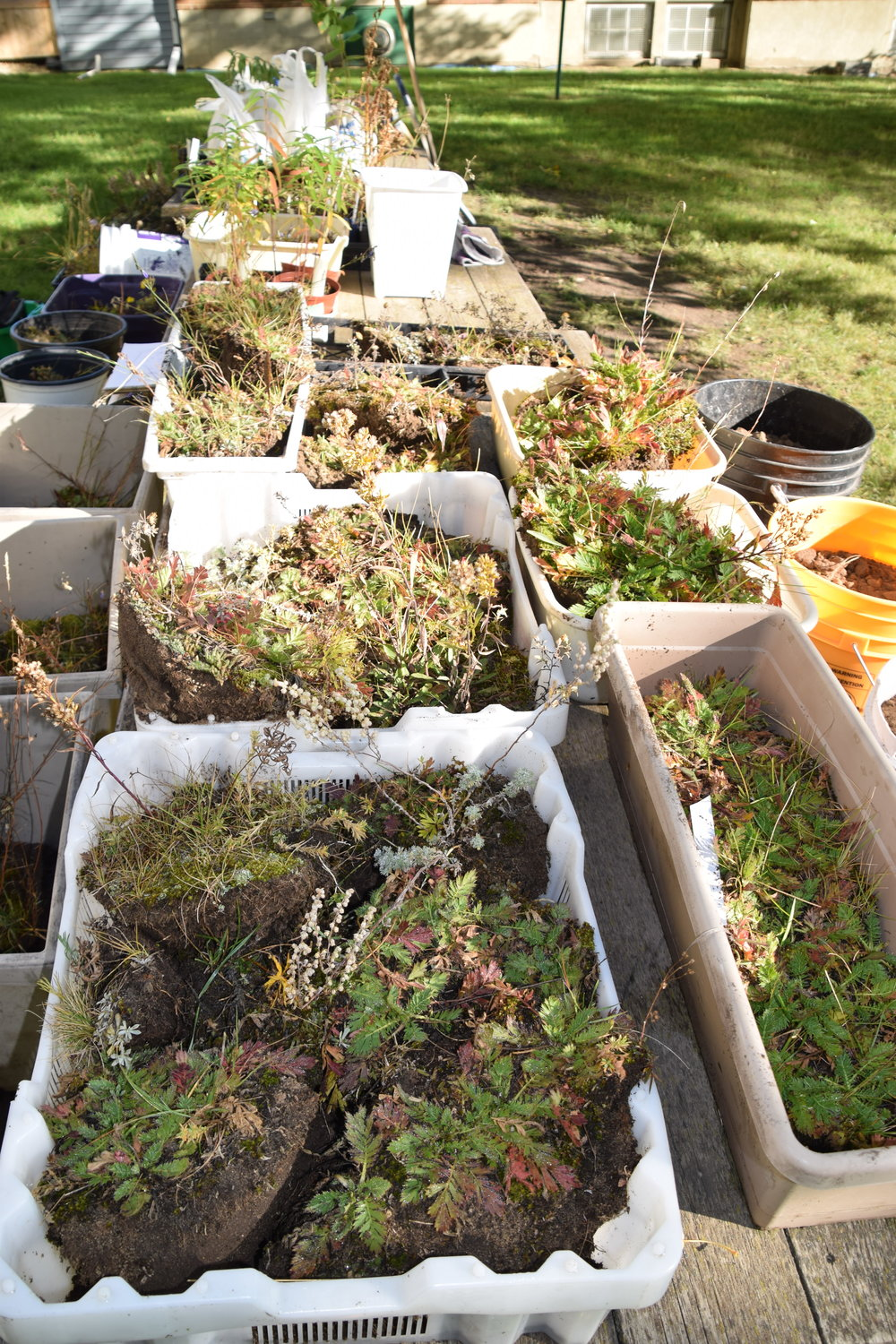Plants waiting to go in back in the ground