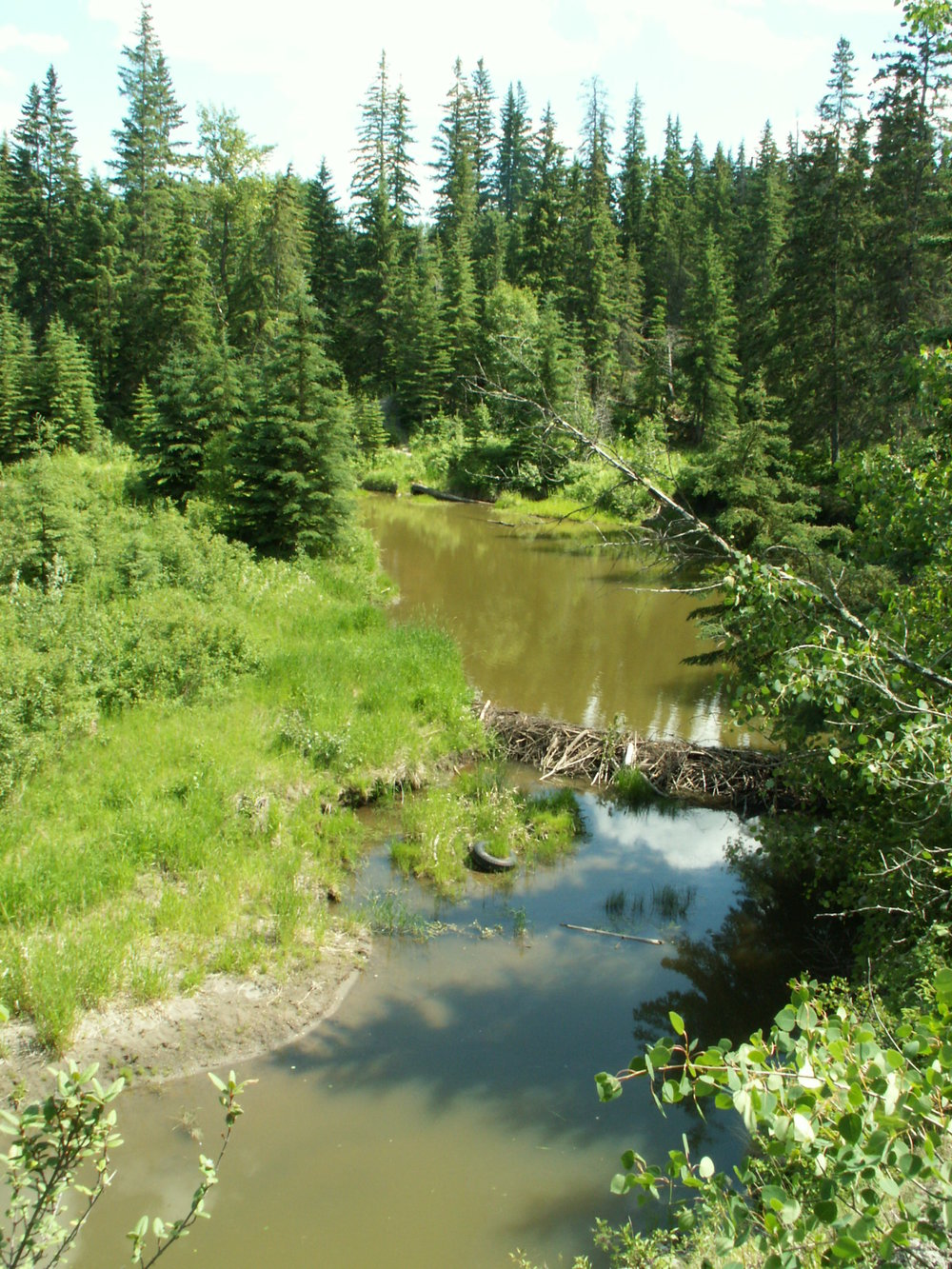 whitemud crk near larch lands.JPG