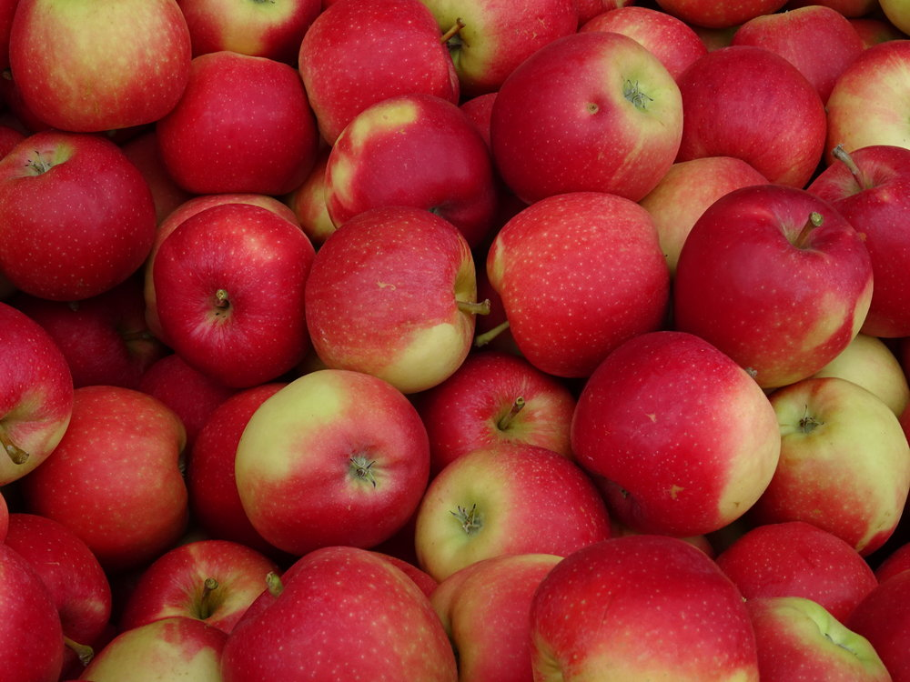 apples - public domain.jpg