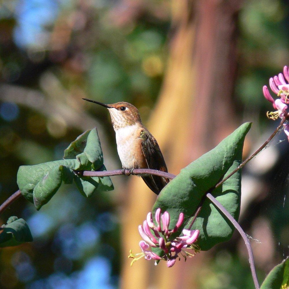 2006-06-29 Humm Birds 032.jpg