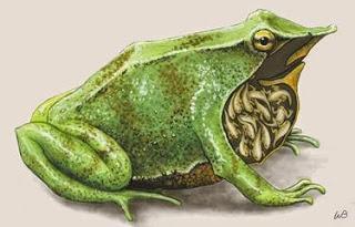 Illustration by ilknowledge.com