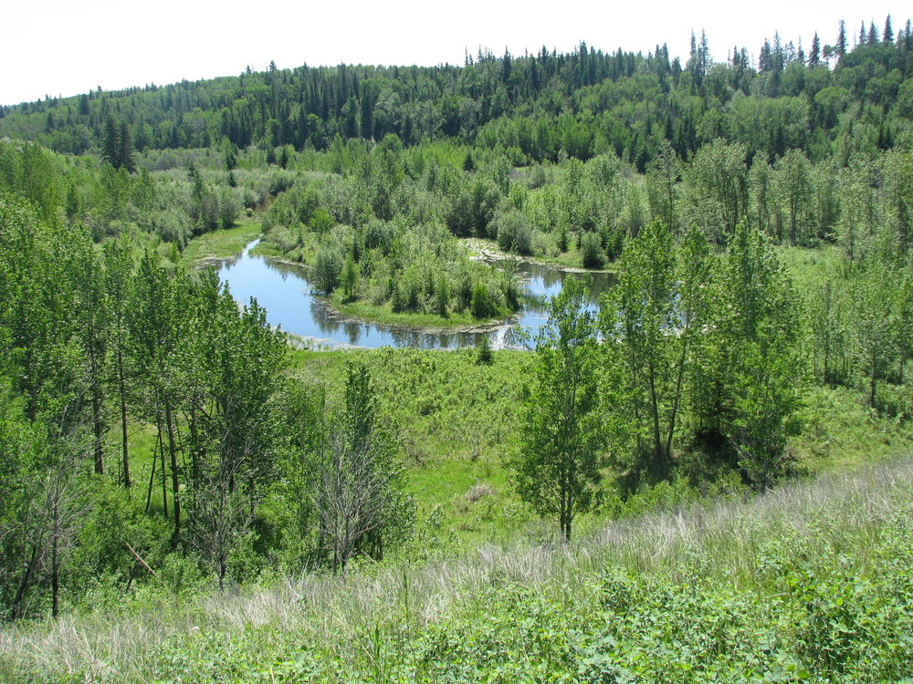 Oxbow Lake next to Pipestone Creek