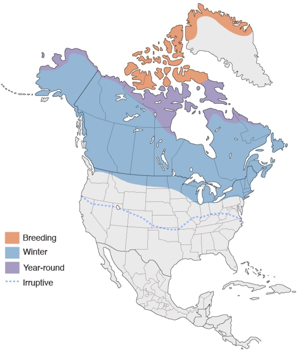 Snowy Owl Range by Cornell Lab of Ornithology.
