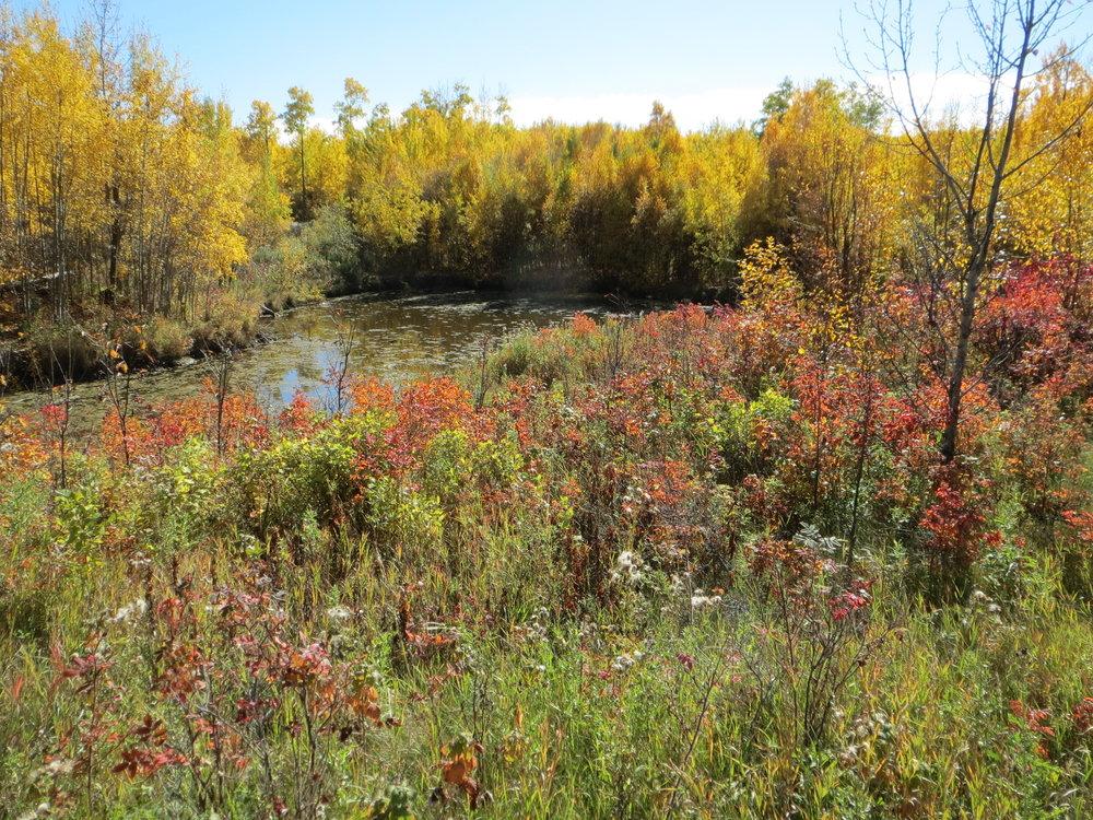 Hicks            Critical habitat in the heart of the Beaverhills Biosphere Reserve.   EXPLORE THIS LAND