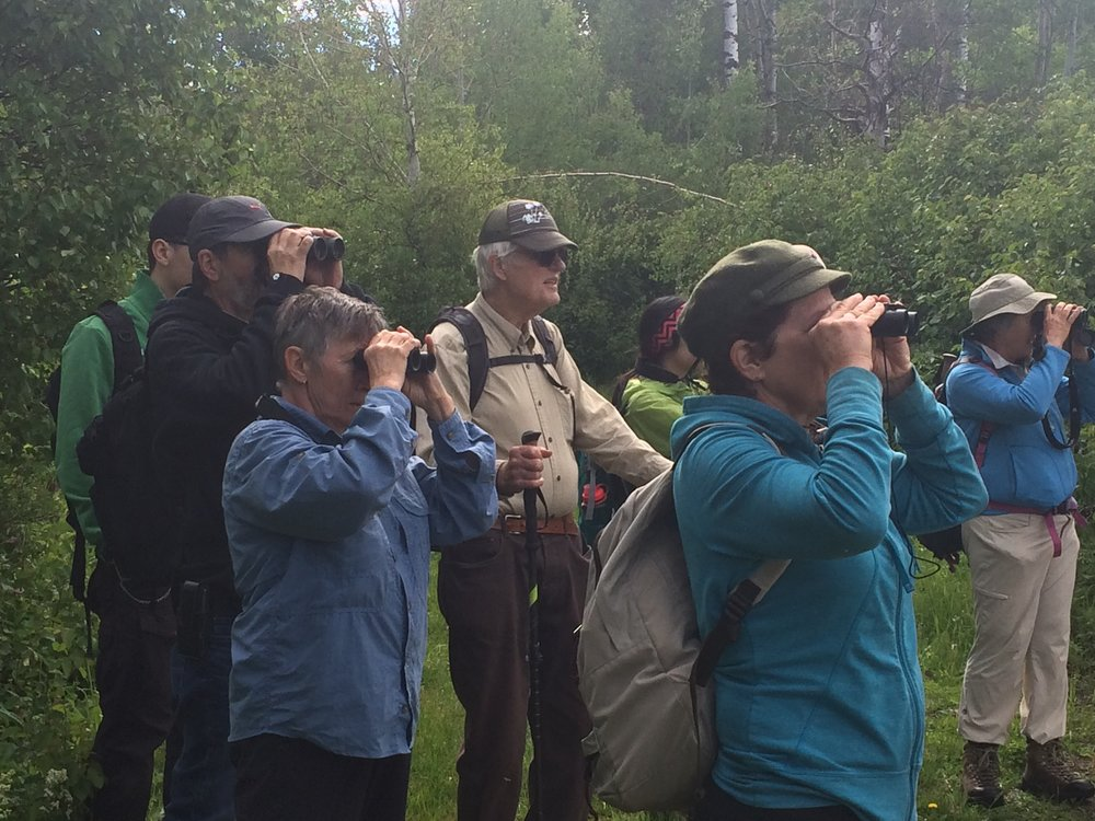Surveying bird and plant life at Lu Carbyn Nature Sanctuary
