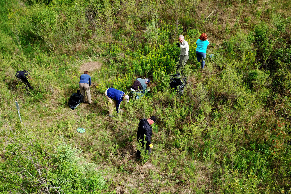 Volunteers removing invasive Leafy Spurge from Larch Sanctuary by Norm Legault