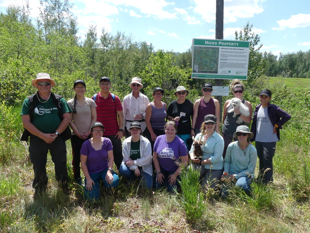 Volunteers removed all visible thistle plants at Hicks
