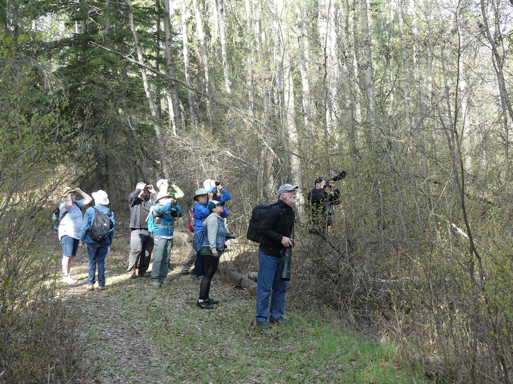Birdwatching at Bunchberry Meadows