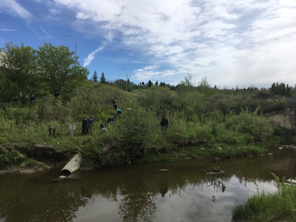 Volunteers removing invasive Leafy Spurge at the entrance to Larch Sanctuary