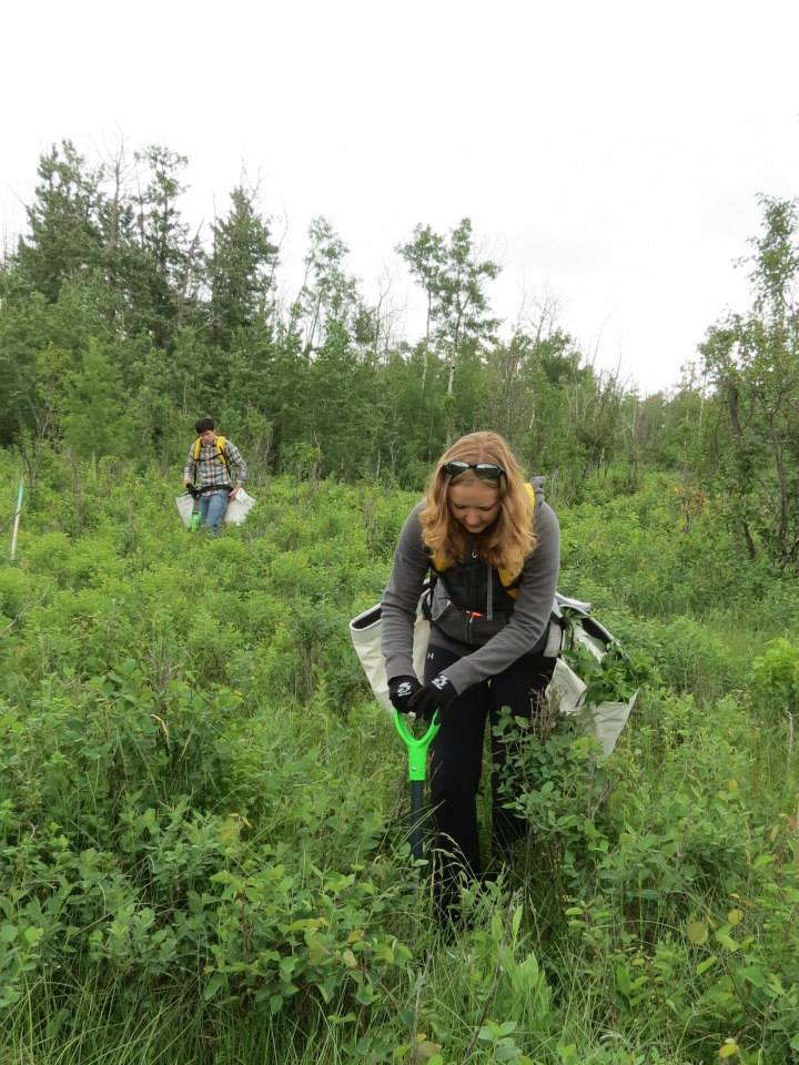 steph planting trees.jpg
