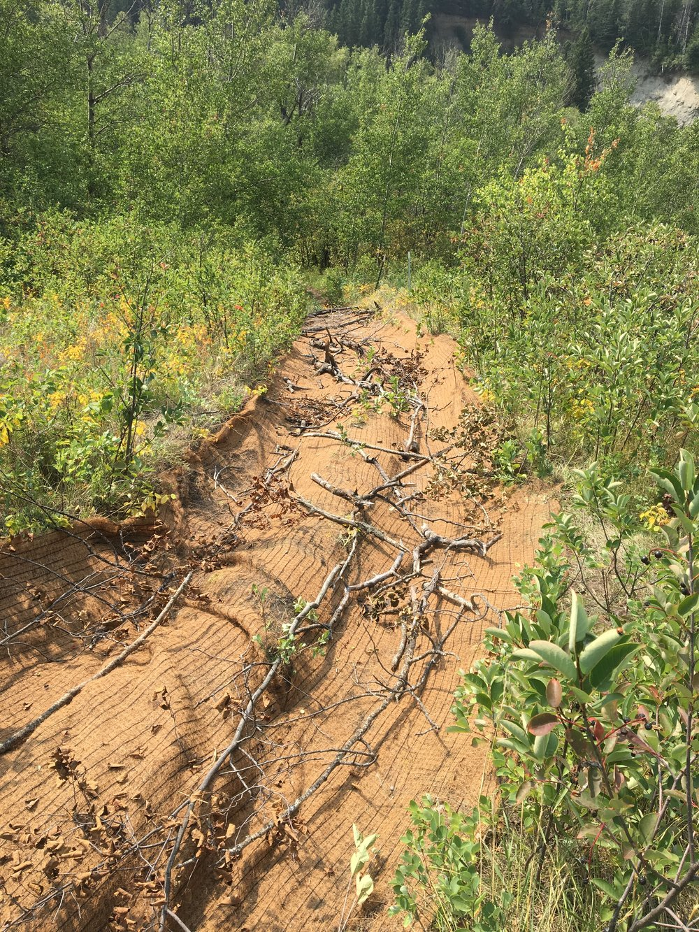 Volunteers restored an old eroded trail at Coates