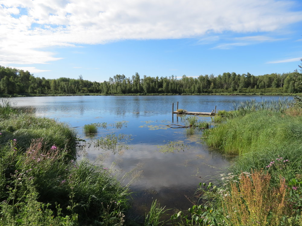 The Lu Carbyn Nature Sanctuary is a unique marshland and boreal forest conservation area approximately 90 kilometres west of Edmonton. (Pam Wight)