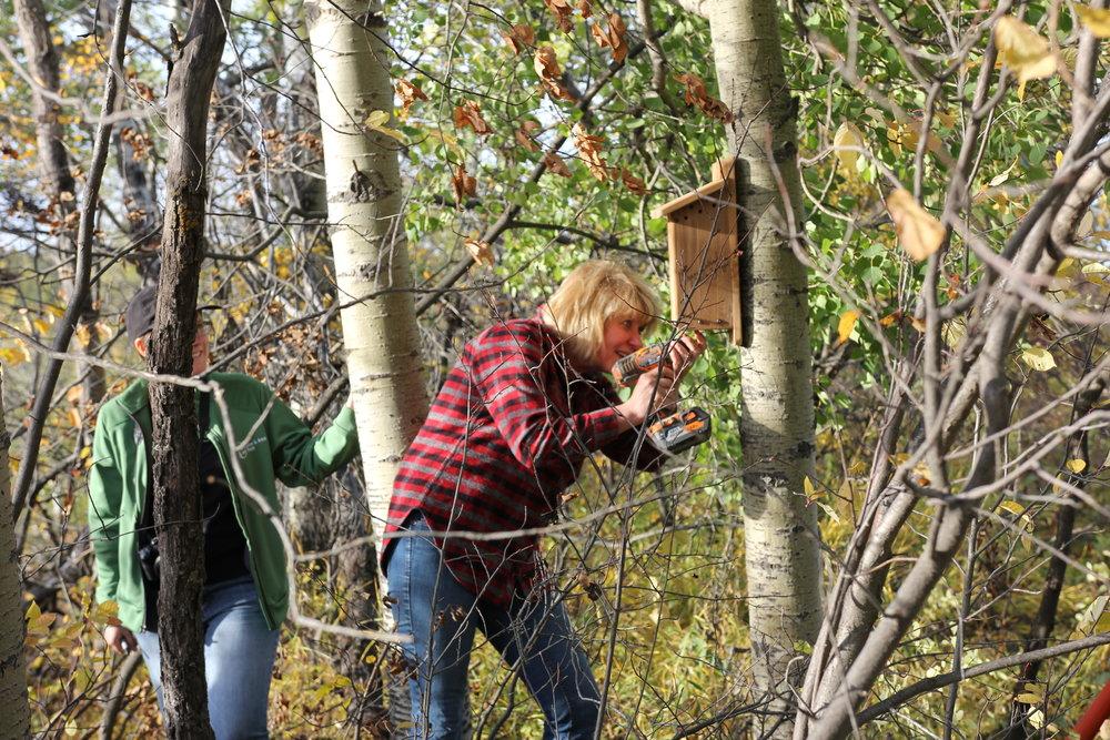 Mayor of Leduc County installing a nest box at Coates