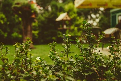 Backyard photo by  Martin Kníže  on  Unsplash