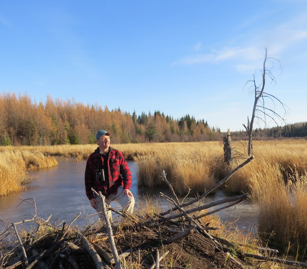 Ecologist Lu Carbyn stands near a beaver dam at the nature sanctuary he donated to the Edmonton and Area Land Trust Land on the conservation society's 10th birthday.