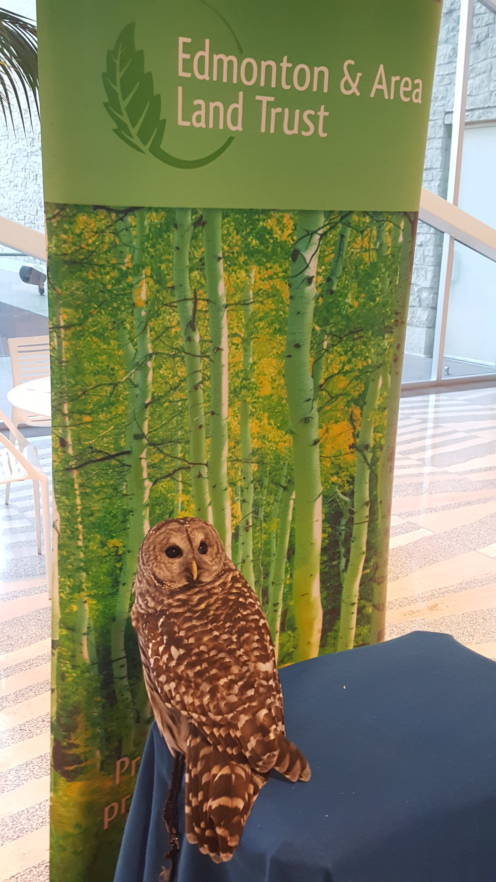 Colonel the Barred Owl at EALT's 10th Anniversary Gala
