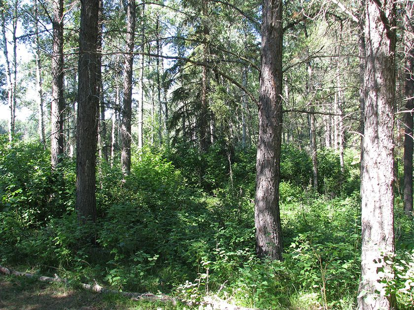 A snapshot of the land recently donated to the Edmonton and Area Land Trust in Parkland County. Submitted photo